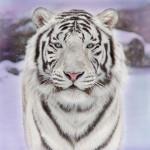 snow-cat_large